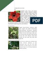Persebaran Flora Bagian Barat Atau Asiatis