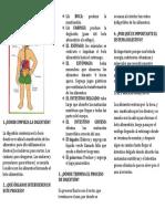 El Sistema Digestivo Triptico