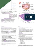 embriologia completoo