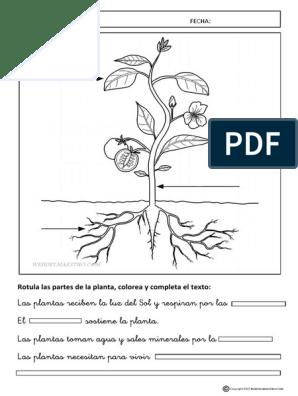 Partes De Una Plantas Actividades 2