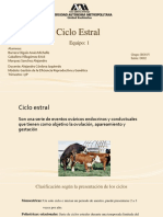 Ciclo estral en distintas especies