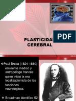 Presentacion Plasticidad Cerebral