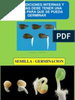 01_GERMINACION-Botánica (3)