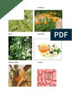 Imagenes Informe Farmacognosia