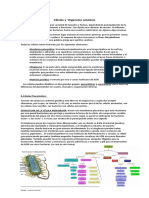 Resumen Celula y Organelos Kine