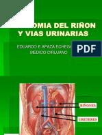 Anatomia Ri F1on