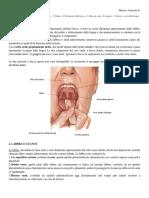 16-Anatomia-II-09.11.15-Cavità orale, visione esterna palato lingua e arterie