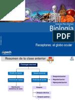 Clase 6 Receptores El globo ocular 2015.ppt