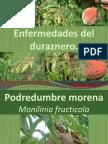 12.Enfermedades del duraznero.pptx
