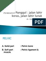 178887346 Anatomi Panggul Ppt