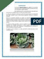Brassica oleracea var capitata - Huaman Salazar.docx