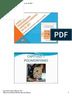 04.-Polimorfismo.pdf