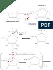 rxn mecanismo de reacción del piruvato