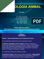 Patrones Morfológicos de Los Animales - Tejido Epitelial y Conectivo Propiamente Dicho (1)