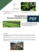 Desarrollo Sostenible Caso Deforestación