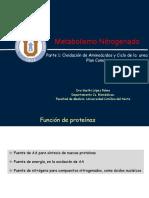 Oxidacio_n_de_aa_y_Ciclo_de_Urea._Plan_Comu_n2018 (1).pdf