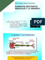 3-LA-NEURONA-1.pdf
