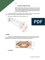 Anatomia Del Miembro Superio1