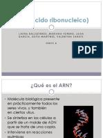 ARN (Ácido Ribonucleico) Final