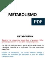 1º. Bases Del Metbolismo.
