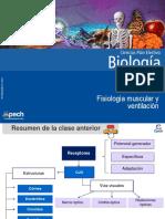 Clase 7 Fisiología muscular y ventilación 2015.ppt