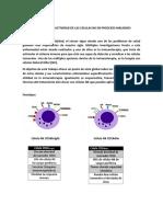 Actividad de Las Celulas Nk en Procesos Malignos