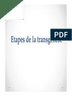 2 Etapes de La Transgénèse