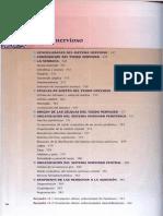 Tejido Nervioso-Histología