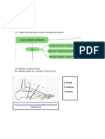 Anatomia radiologica miembros inferiores..docx
