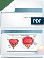 Clase Urologia