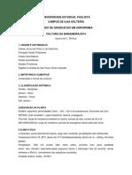 CulturaBanana.pdf