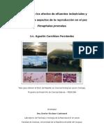 Fernandez 2016 - Efectos de Efluentes Industriales y Urbanos en Pimephales Promelas