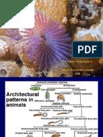 12Phylum Annelida-1.ppt