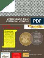 Estructura de La Membrana Celular Pawer