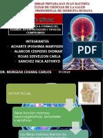 Grupo 4 Pares Craneales (Vii - Xii) Semiologia Neurologica
