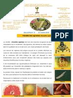 17-15-ceratite-des-agrumes