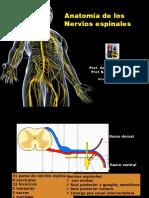 Ns Espinales SNA ANAT122