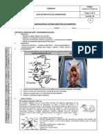 146787202-PRAXIS-4-OBSERVACION-DE-SISTEMA-DIGESTIVO-DE-MAMIFERO.pdf