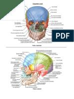 Ossos Axiais e Apendiculares