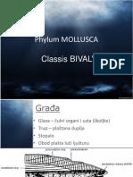 03 - Bivalvia