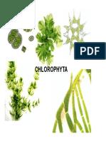 7_Clorofita