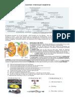 examen sistema excretor.docx