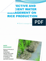 EFFECTIVE AND EFFICIENT WATER MANAGEMENT ON RICE PRODUCTION.pptx