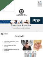 Clase 24 Organologia Abdominal_DBIO1050
