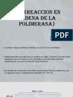 PCR Forense