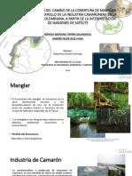 Identificación Del Cambio de La Cobertura de Manglar Frente Al Desarrollo de La Industria Camaronera en La Costa Caribe Colombiana, A Partir de La Interpretación de Imágenes de Satélite