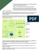 Discu5 fosforilacion oxidativa