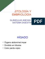 Glandula Anexas Higado-pancreas