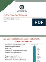clase 3. Citologia bacteriana 2018.pdf