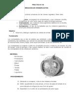 18 Cromoplastos y Amiloplastos